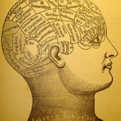 Phrenology Brain