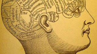 Phrenology Brain