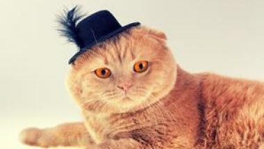 Cat wearing felt hat with feather